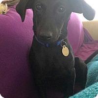 Adopt A Pet :: Hadley - Homewood, AL