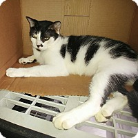 Adopt A Pet :: Fernando - New Port Richey, FL