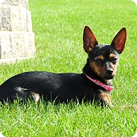 Adopt A Pet :: Bella - Washington, PA