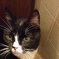 Adopt A Pet :: Midnight - New York, NY
