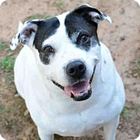 Adopt A Pet :: DOLLY - Tallahassee, FL