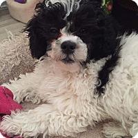 Adopt A Pet :: Jessie - Adoption Pending - Mississauga, ON