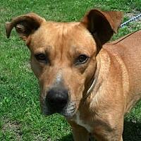 Adopt A Pet :: AA-Champ - Tyler, TX