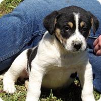 Adopt A Pet :: Pluto (6 lb) Video! - Sussex, NJ