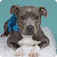 Adopt A Pet :: Honey - Baton Rouge, LA