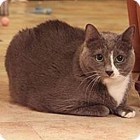 Adopt A Pet :: Sabrina - Smyrna, GA