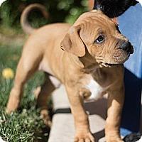 Adopt A Pet :: Chandler - Sacramento, CA