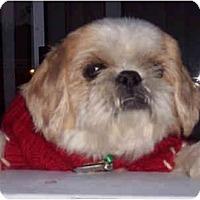 Adopt A Pet :: Dodger - Mays Landing, NJ