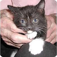 Adopt A Pet :: Reva - Clementon, NJ