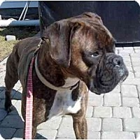Adopt A Pet :: Ruca - Woolwich, ME