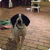 Adopt A Pet :: Molly - Providence, RI