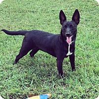 Adopt A Pet :: Lily May - Homewood, AL