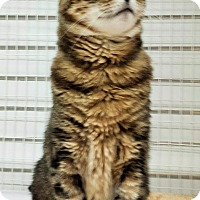 Adopt A Pet :: Marcus - East Meadow, NY