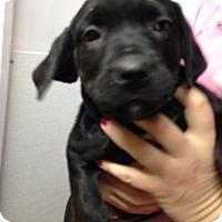 Adopt A Pet :: TULIP LITTER - Pompton Lakes, NJ