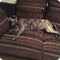 Adopt A Pet :: DAISY MAE - Boca Raton, FL