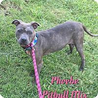 Adopt A Pet :: Phoebe - Cheney, KS