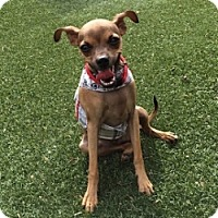 Adopt A Pet :: Peanut One - Mesa, AZ
