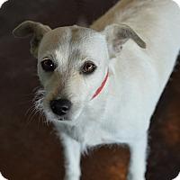 Adopt A Pet :: Pancake - San Antonio, TX