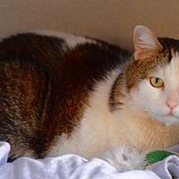 Adopt A Pet :: Angel - Des Moines, IA