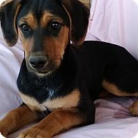 Adopt A Pet :: Karma meet me 3/31 - Manchester, CT