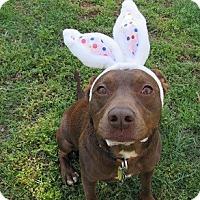 Adopt A Pet :: BoJack - Athens, GA