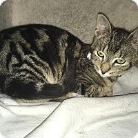 Adopt A Pet :: Jack - Tracy, CA