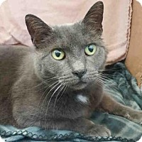 Adopt A Pet :: LOVEY - Pittsburgh, PA