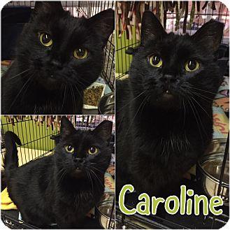 Adopt A Pet :: Caroline  - Blasdell, NY