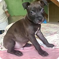 Adopt A Pet :: Pepper - Santa Ana, CA