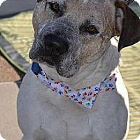 Adopt A Pet :: Tagg - San Diego, CA