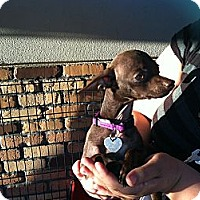 Adopt A Pet :: Snickers - North Hollywood, CA