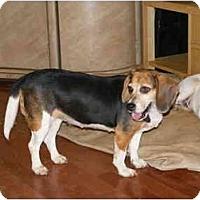 Adopt A Pet :: Lilian - E Windsor, CT