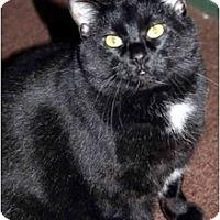 Adopt A Pet :: Elizabeth - Racine, WI