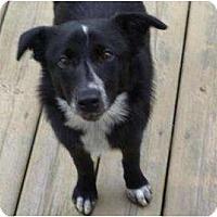 Adopt A Pet :: Boston - Belleville, MI