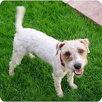 Adopt A Pet :: Jack III - Scottsdale, AZ