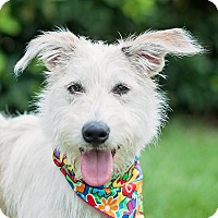 Adopt A Pet :: Aspen - Kingwood, TX