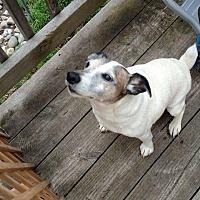 Adopt A Pet :: Bandit - Blue Bell, PA