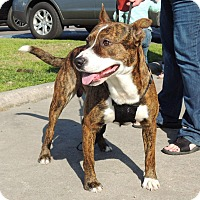 Adopt A Pet :: TeeBee - Humble, TX