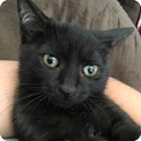 Adopt A Pet :: Potion - McHenry, IL
