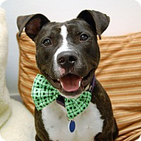Adopt A Pet :: Derrick - Wilmington, DE