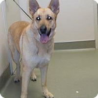 Adopt A Pet :: Dakota - Wildomar, CA