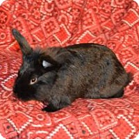 Adopt A Pet :: Jack - Tampa, FL