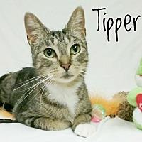 Adopt A Pet :: Tipper - Kendallville, IN