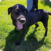 Adopt A Pet :: Bastian - Coldwater, MI