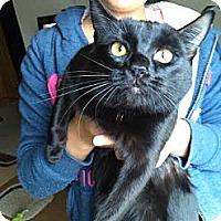 Adopt A Pet :: Medium - Seattle, WA