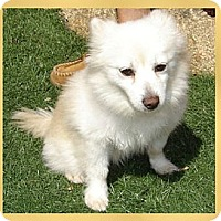 Adopt A Pet :: Piper - Scottsdale, AZ