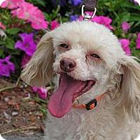 Adopt A Pet :: Spencer - Rigaud, QC