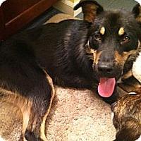 Adopt A Pet :: Presley - Cleveland, OH