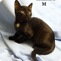 Adopt A Pet :: Hazzard - Bentonville, AR