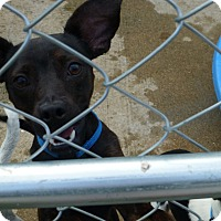Adopt A Pet :: Happy - Wyanet, IL